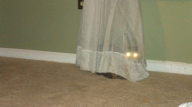 10 Cats Who Are Winning At Hide And Seek