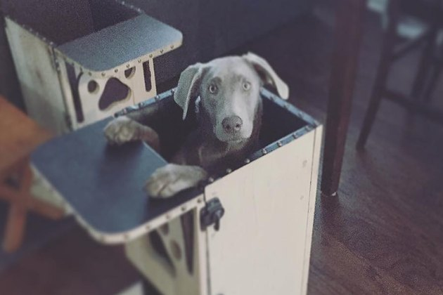 This Dog's Adorable High Chair Actually Saves Her Life