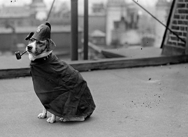 Vintage photo of a dog dressed up like a policeman smoking a pipe