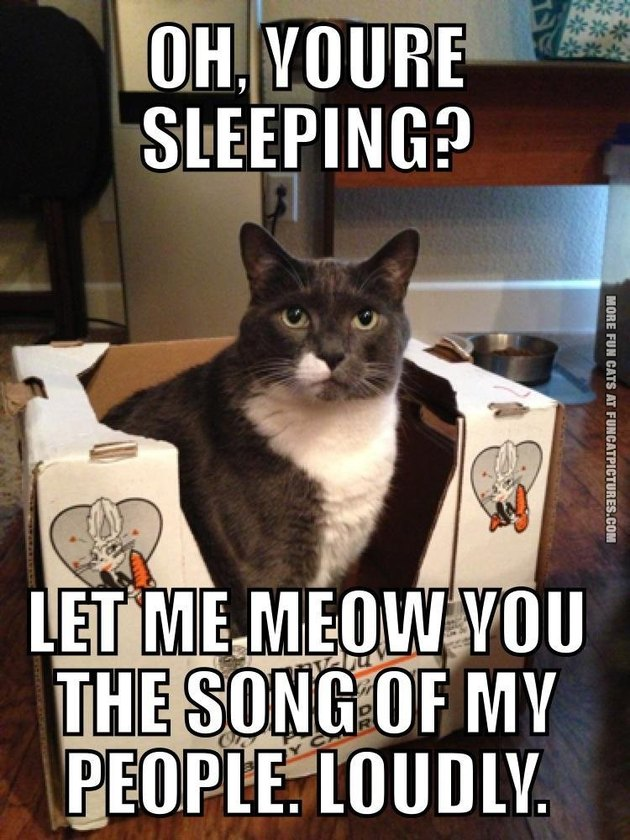 Oh, you're sleeping? Let me meow you the song of my people. Loudly.