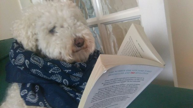 Dog in scarf reading a book