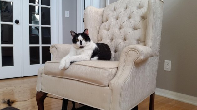 Cat looking very stern, sitting in a chair