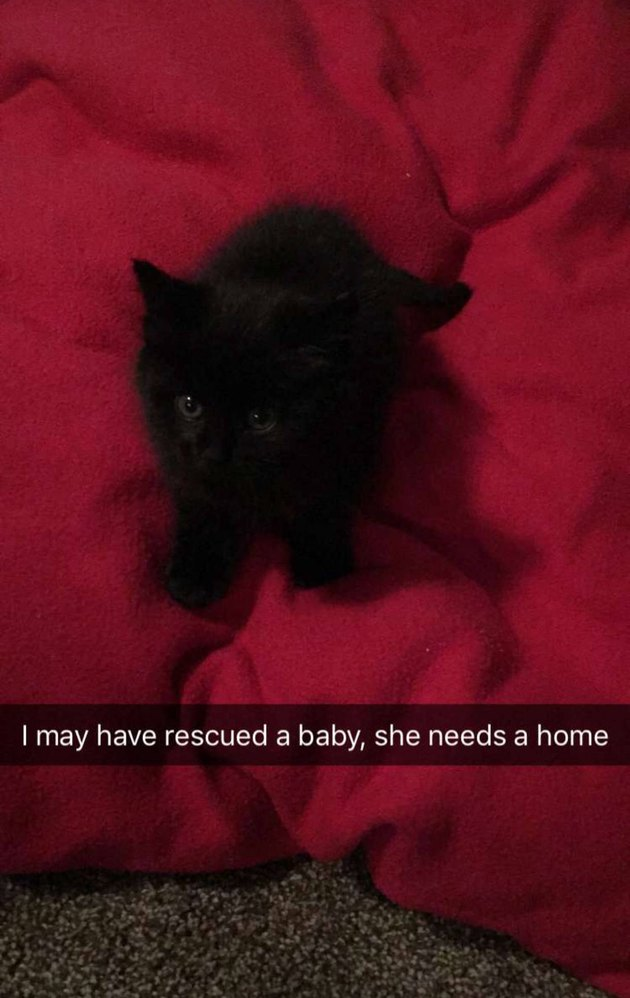 This Woman Didn't Plan to Keep This Kitten—But Her Dog Had Other Plans