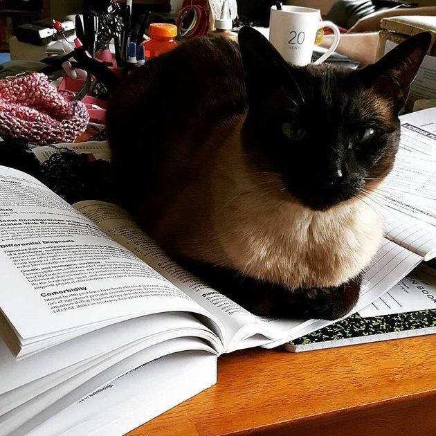 Cat on Books