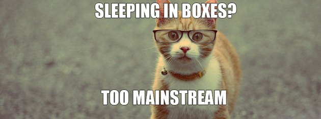 "Cat with glasses with text ""Sleeping in boxes? Too mainstream."""