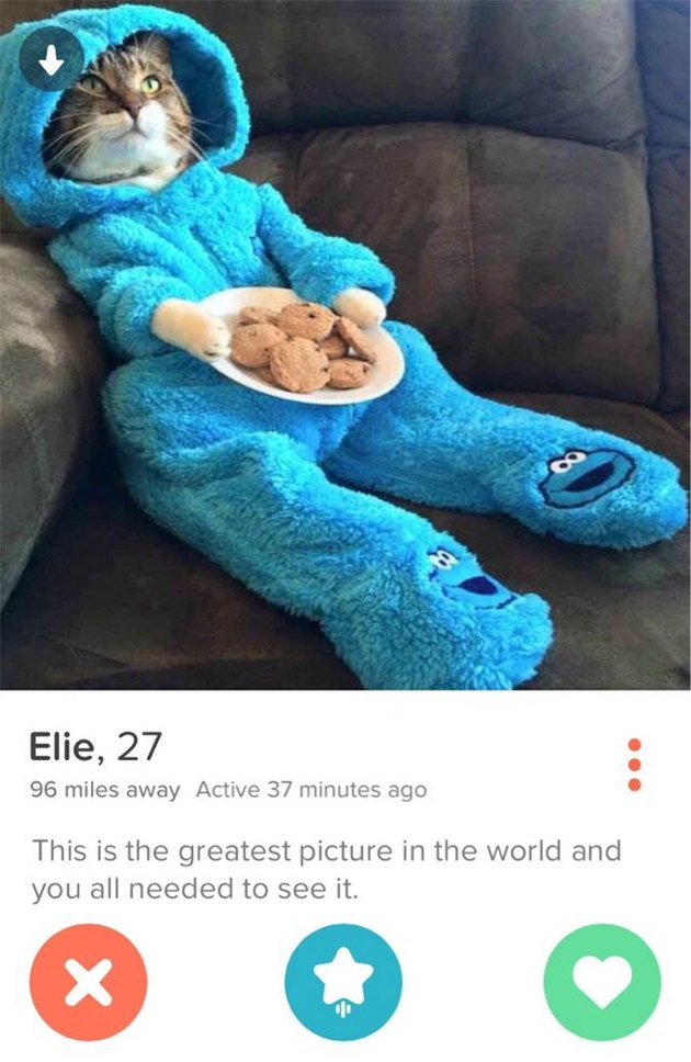 Tinder profile with cat in cookie monster pajamas