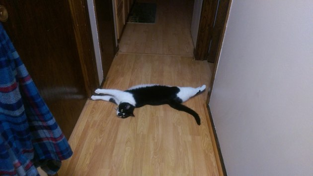 Cat stretching across the width of a hallway.
