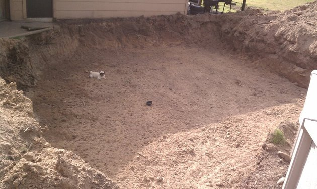 Pug in enormous, shallow hole.