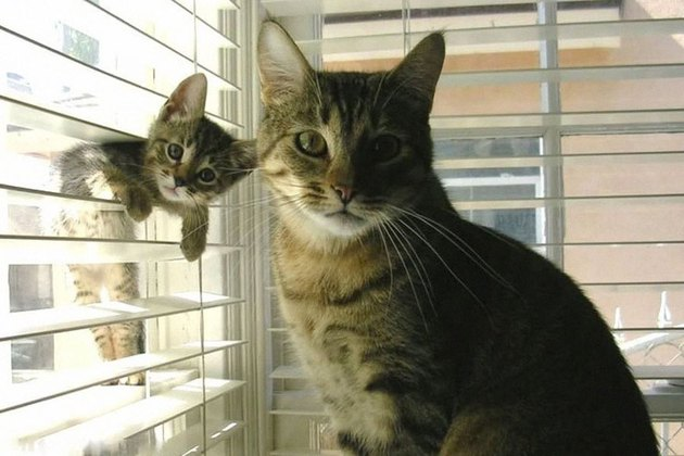 Animal moms who have made huge mistakes