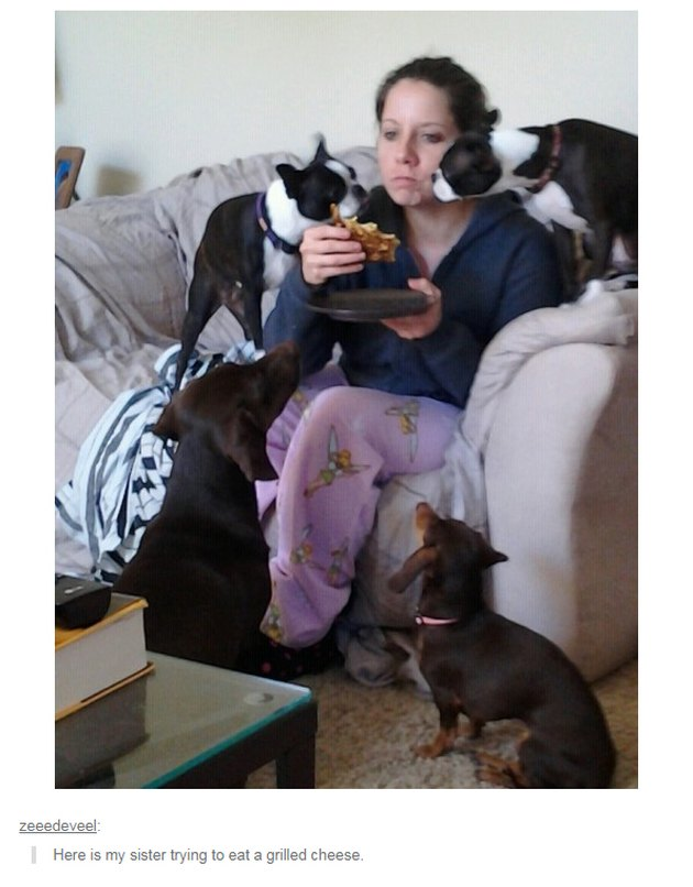 Dogs grouped around woman with sandwich.