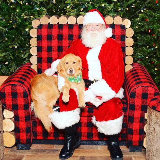 Dog seated next to Santa in big armchair.