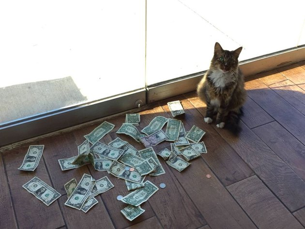 This Kitty Is A Private Dancer Who Dances For Money