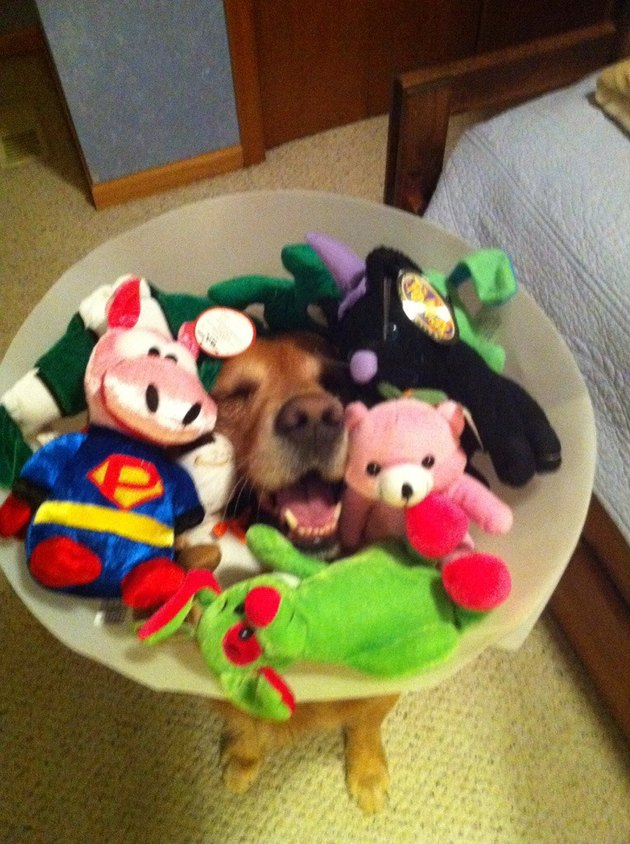 Dog wearing E-collar filled with toys.