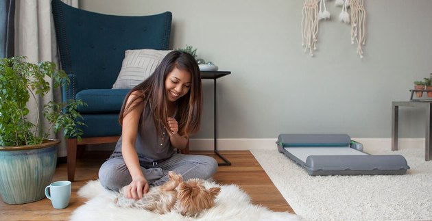 Someone Just Invented a Self-Cleaning, Indoor Potty Pad for Dogs