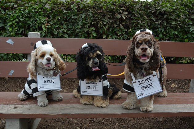 "Costumed Canines Make The Scene At ""Howl-O-Ween"" Pet Parade"