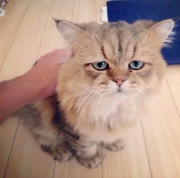 Cat that looks disappointed