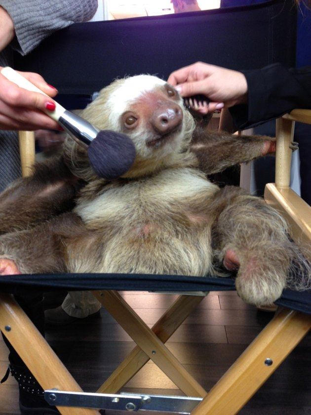 13 Sloths You Won't Believe Existed