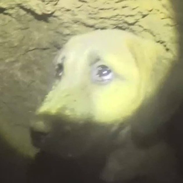 Kuyu dog rescued from borehole