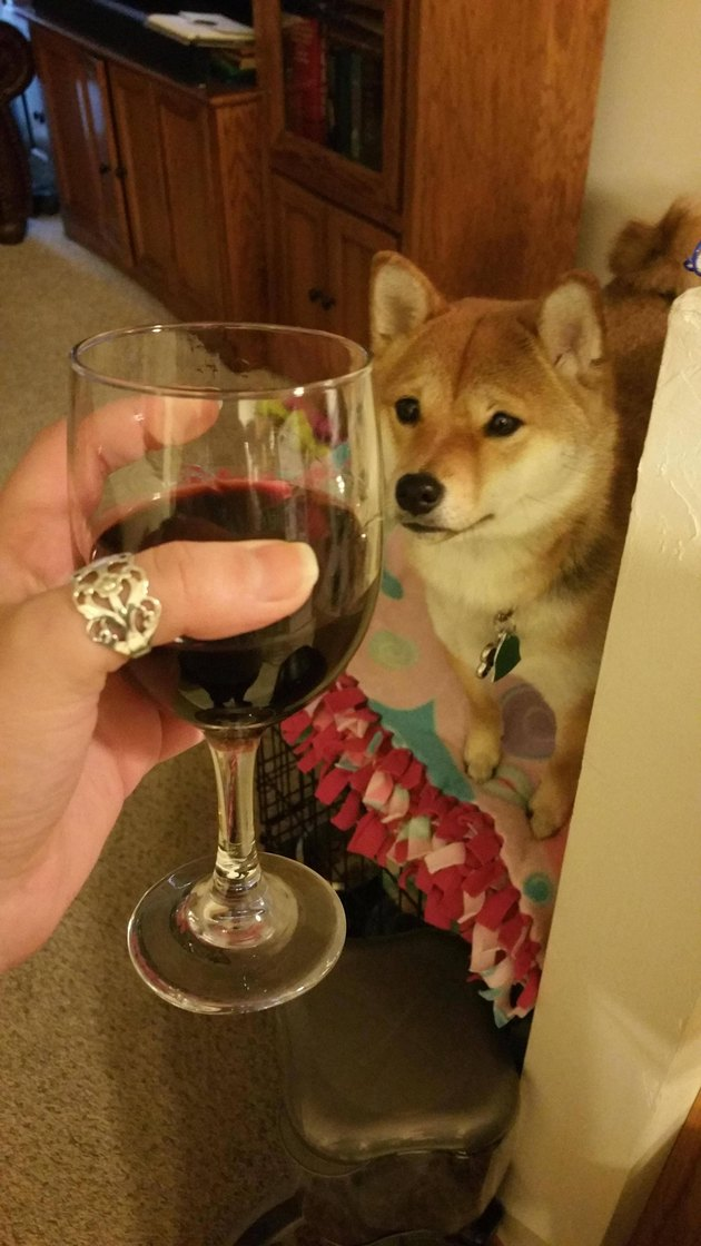 Dog looking at glass of wine
