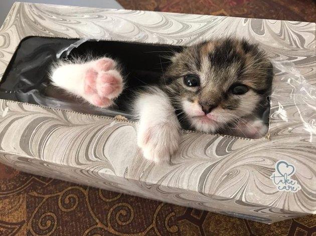 Missing kitten found sleeping in Kleenex box