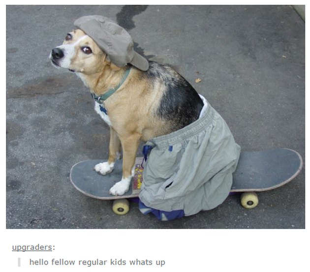 Dog wearing hat and pants on skateboard.