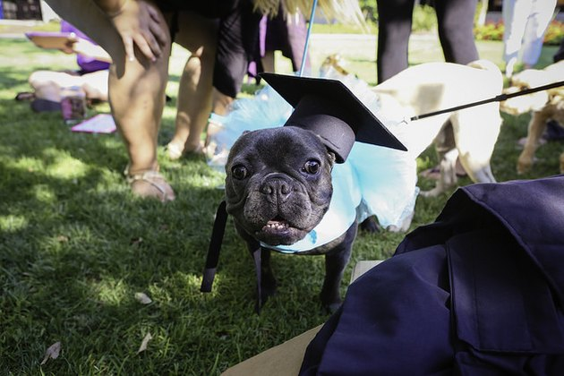 Florida college honors companion animals with graduation ceremony