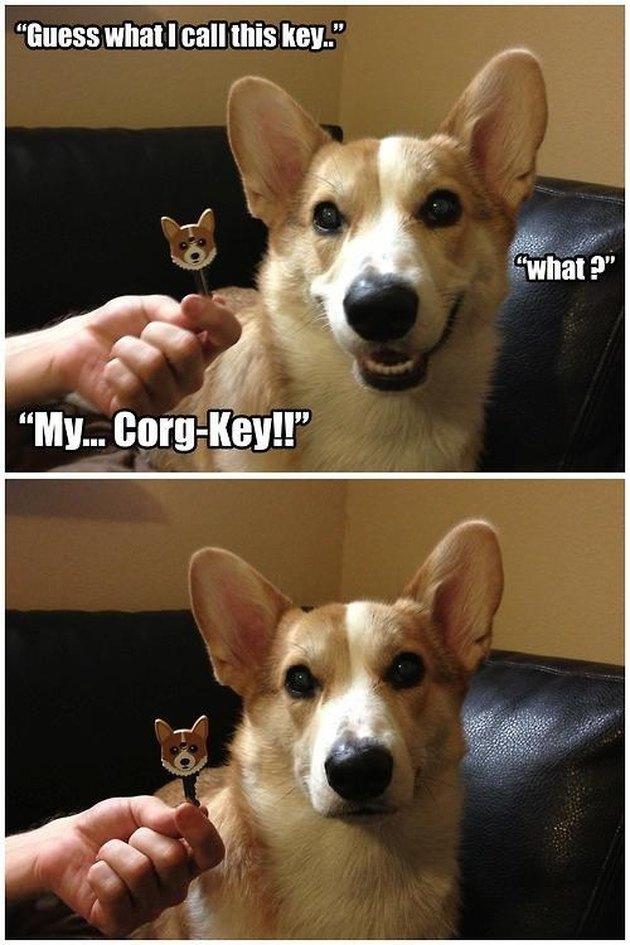 "Photo set of Corgi next to cartoon Corgi key cap. Caption: ""Guess what I call this key."" ""What?"" ""My... Corg-Key!!"""