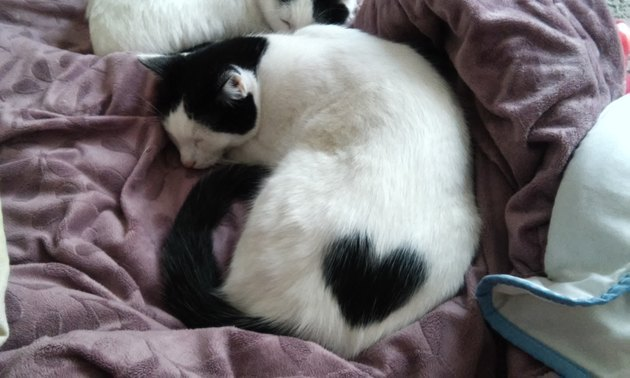 Cat with a black heart on his back