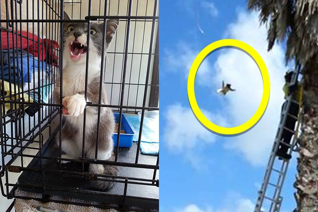 Cats Calmly Jumps From Tree, Spoils Daring Rescue