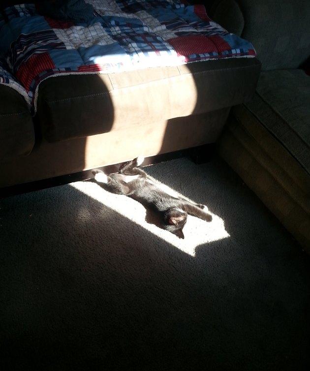 Kitten in sunny spot.