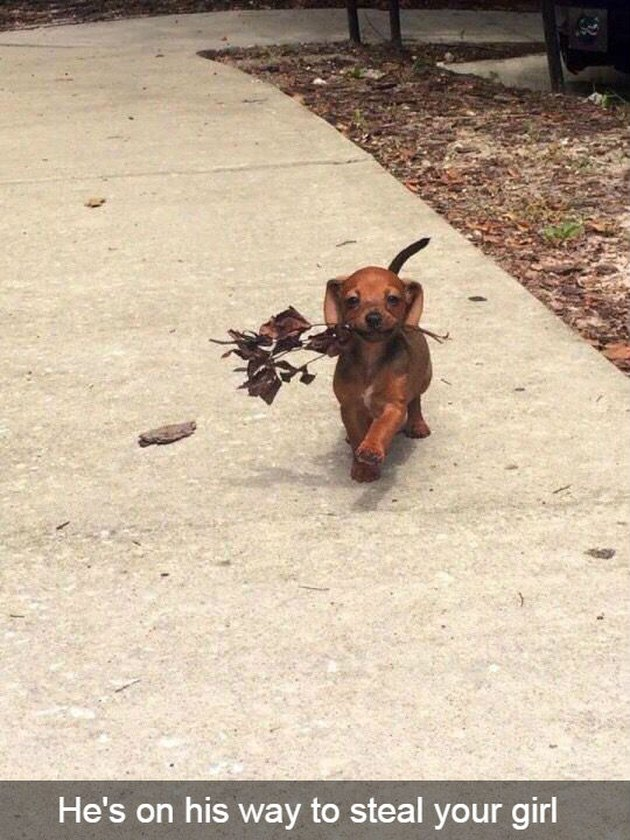 Confident-looking puppy carrying leaves.