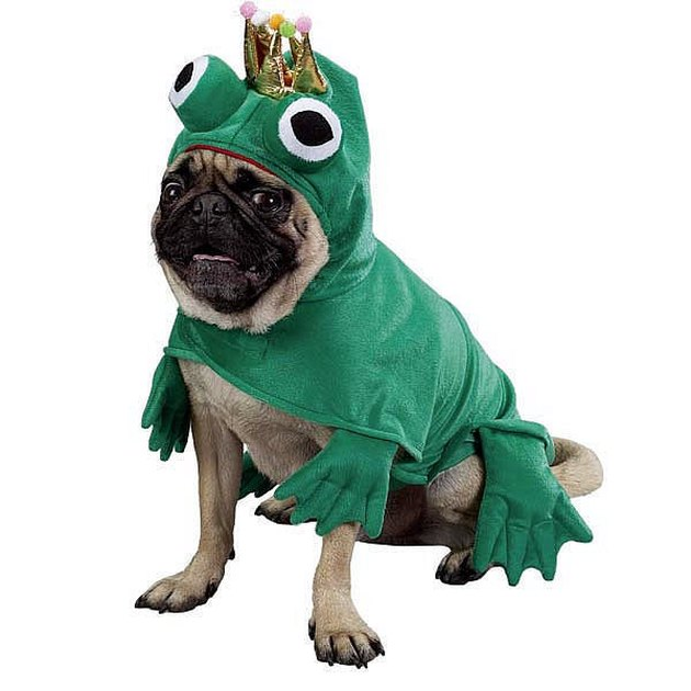 Dog in frog prince costume