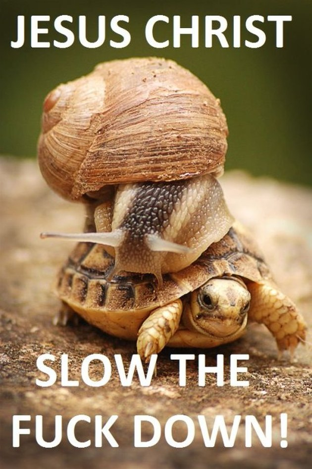 Snail on a turtle.