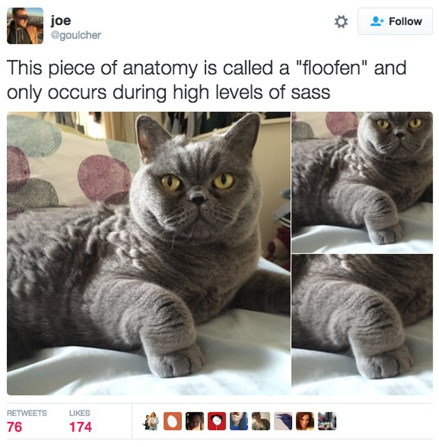 Tweet of a cat with a sassy paw.