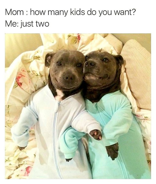 Two dogs in matching pajamas.