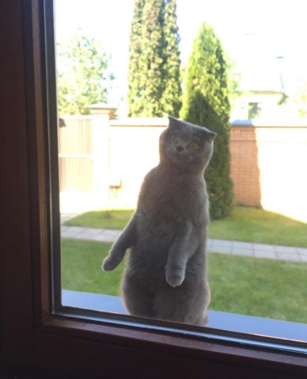 Literally Just 16 of the Funniest Cat Pictures We've Ever Seen