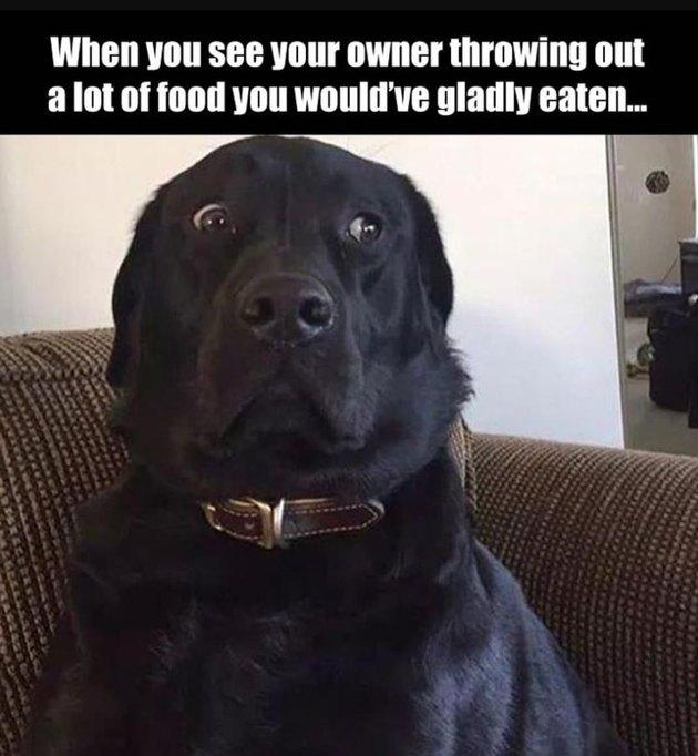 Dog look distressed