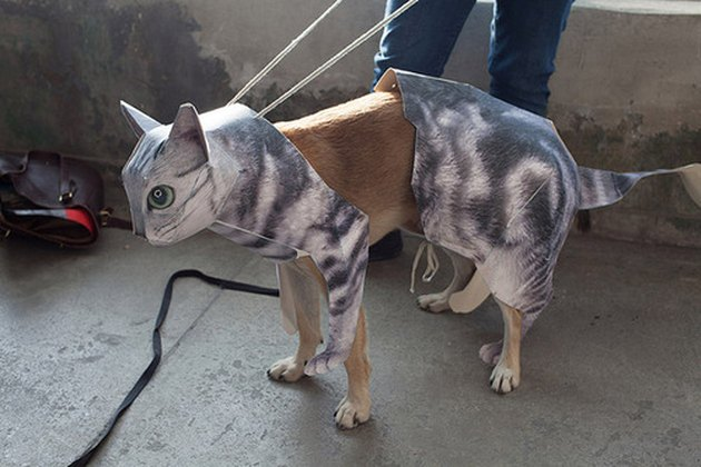 Dog dressed as a cat.