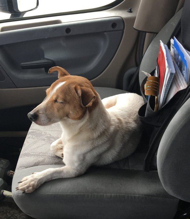 Jack Russell terrier leads truck driver to malnourished rabbit