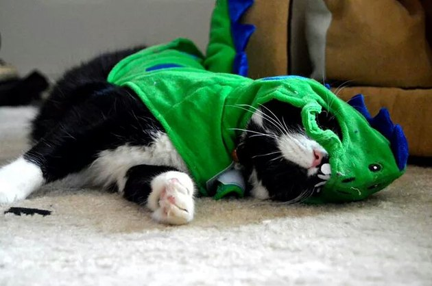 Animals Who Hate Halloween