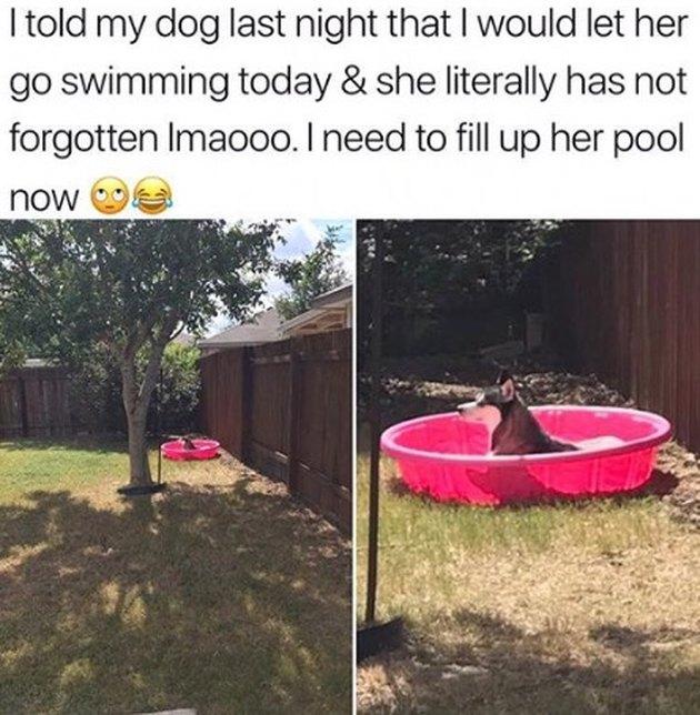 Dog sitting in swimming pool