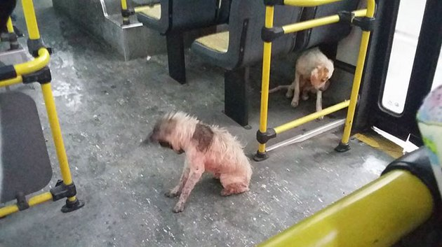 Hero Bus Driver Gives Pups A Free Ride During Thunderstorm