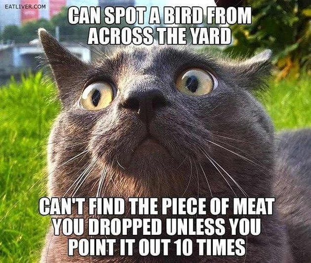 "Cat with text ""Can spot a bird from across the yard. Can't find the piece of meat you dropped unless you point it out 10 times."""