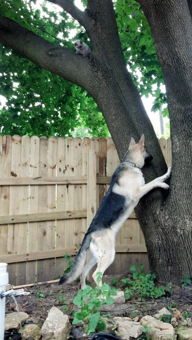 Dog doesn't notice kitten perched in tree right above it.