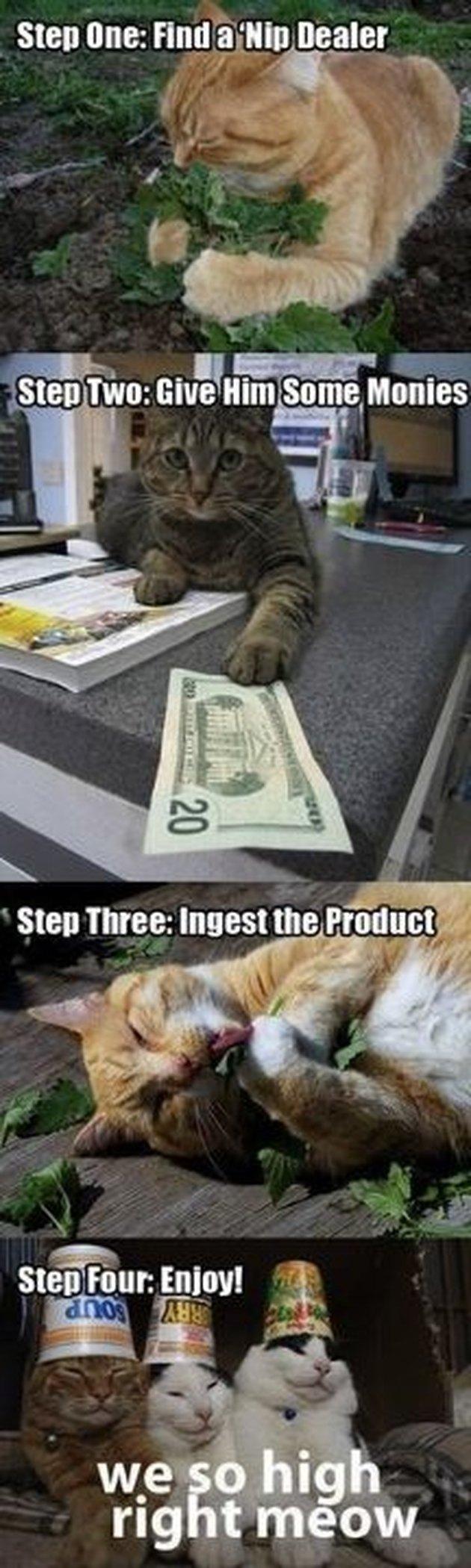Catnip rings