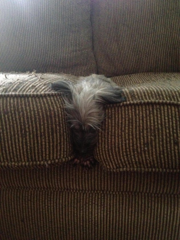 Here are 24 pets acting up when no one is looking.