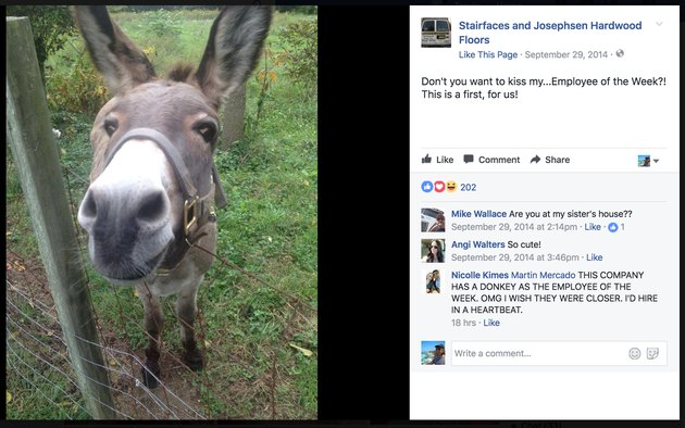 Donkey named Employee of the Week at New Jersey flooring company