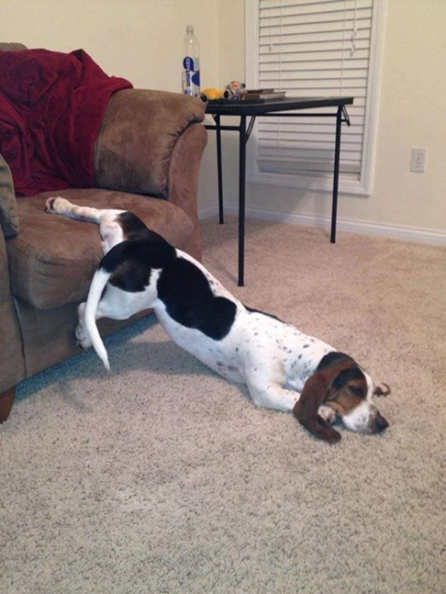 Dog with one leg on couch