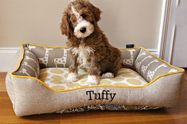 dog in customized bed