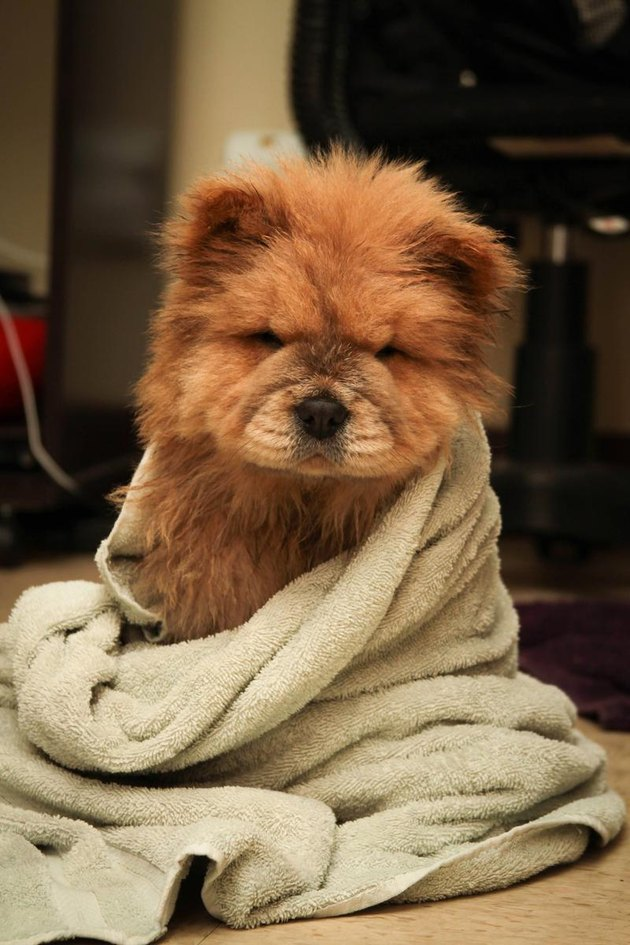Puppy looks like a frowning bear